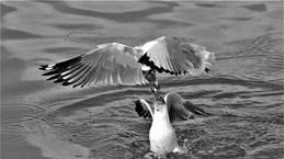 """""""大自然的瞬间""""图片展在河内举行"""