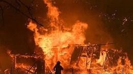 越南驻俄罗斯大使馆证实俄罗斯一处温室大棚种植区发生火灾中有越南人遇难的信息