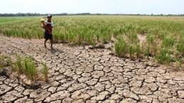 越南九龙江三角洲13个省市中的8个省份遭受严重的海水入侵
