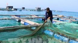 """中部以南——越南各种龙虾""""王国"""""""