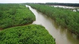 减轻经济社会发展活动对太平省太瑞湿地保护区带来的负面影响