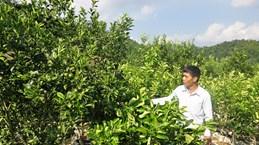 北件省完善红橘产品价值链 为少数民族带来稳定生计