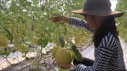 巴地头顿省加大高科技应用  提高农业生产价值