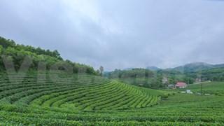 打造驰名品牌  恢复发展传统的球江茶区