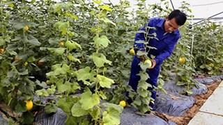 宁平省将开展新农村建设目标计划与可持续扶贫计划相结合