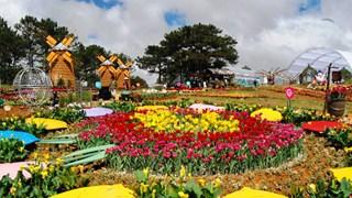 探索大叻花卉节