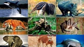 宣光省加大野生动物保护力度