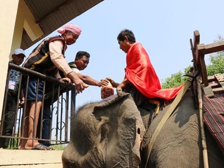 颇具本土文化特色的祈求大象健康仪式在得乐省举行
