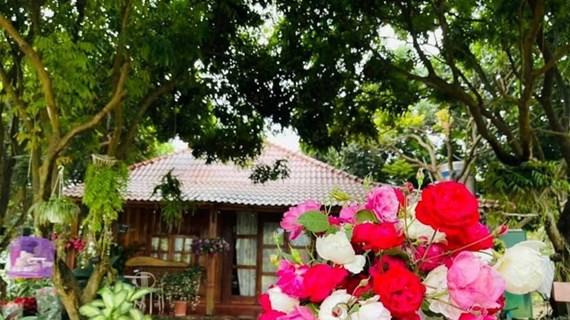 组图:游览荣获国际认证的越南有机玫瑰花园