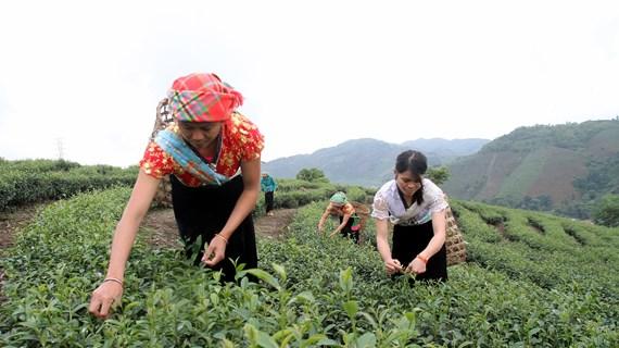莱州省努力做好科学技术应用和新农村建设两手抓