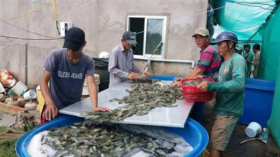 薄辽省将拔出3万亿越盾 力争建成全国虾类工业中心