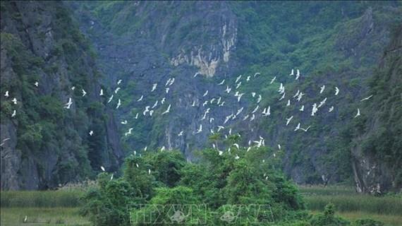 越南努力保护并可持续利用湿地资源