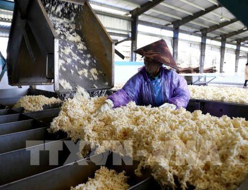 越南橡胶出口恢复增长前景较为乐观 hinh anh 1