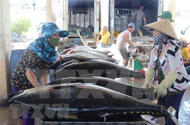 2019年越南金枪鱼出口额增长10.2% hinh anh 1