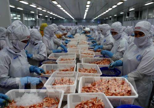 越南要研究对俄罗斯和波兰等新市场进行虾类出口 hinh anh 1