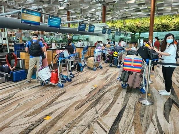 在新加坡的300名越南公民已安全回国 hinh anh 1