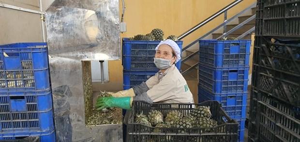 组图:越南企业在新冠肺炎疫情的背景下加大生产力度 hinh anh 1