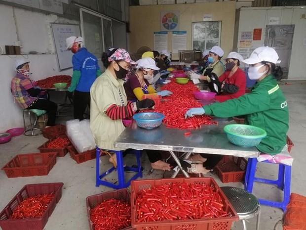 组图:越南企业在新冠肺炎疫情的背景下加大生产力度 hinh anh 2