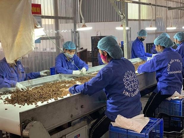 组图:越南企业在新冠肺炎疫情的背景下加大生产力度 hinh anh 4