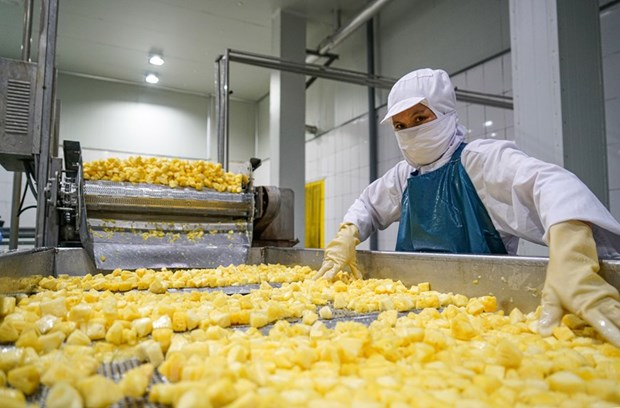 组图:同交农场的菠萝加工出口流程的情景 hinh anh 6