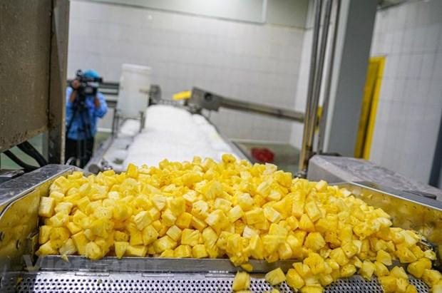 组图:同交农场的菠萝加工出口流程的情景 hinh anh 7