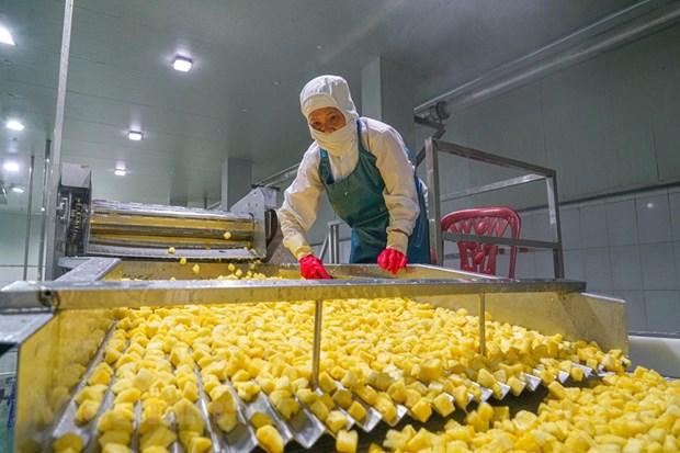 组图:同交农场的菠萝加工出口流程的情景 hinh anh 8