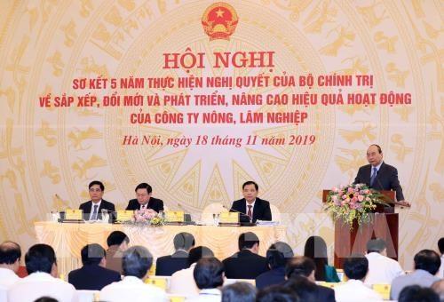 政府总理阮春福:2020年内完善农林业公司重组工作 hinh anh 1
