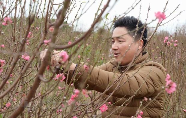 更子春节即将来临 廷榜桃花村准备迎接大丰收 hinh anh 2