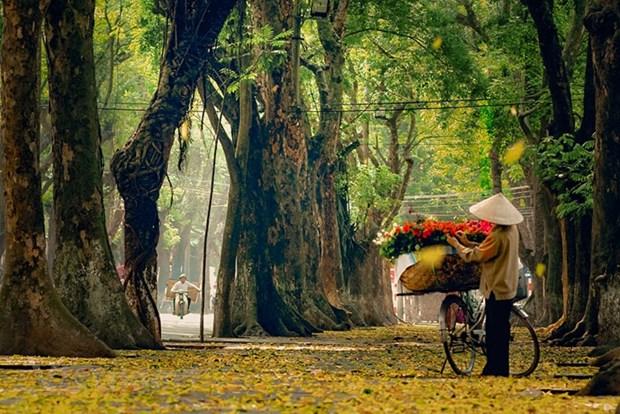组图:花卉小货郎为河内秋天增添了一道亮丽的风景 hinh anh 11