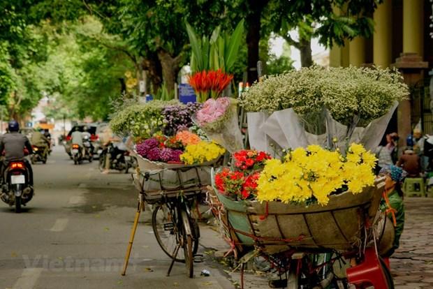组图:花卉小货郎为河内秋天增添了一道亮丽的风景 hinh anh 1
