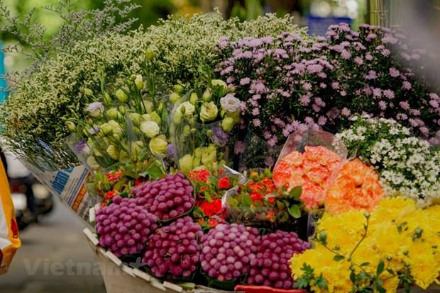 组图:花卉小货郎为河内秋天增添了一道亮丽的风景 hinh anh 3