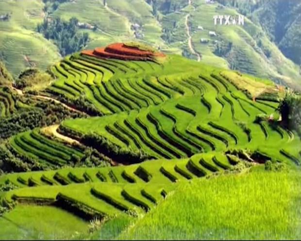 越通社新闻节目2015年7月18日 hinh anh 1