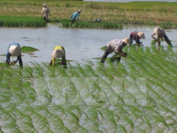 日本公司拟在河南省投资大米生产加工项目 hinh anh 1