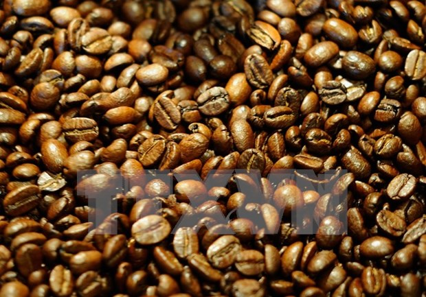 越南大叻咖啡在美国星巴克连锁店系统上柜销售 hinh anh 1