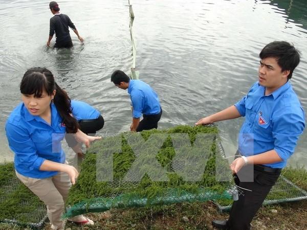 越南岘港市与老挝沙拉湾省进一步加强青年工作交流与合作 hinh anh 1