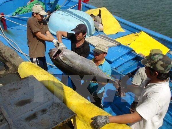 日本企业拟对越南富安省金枪鱼加工领域投资 hinh anh 1
