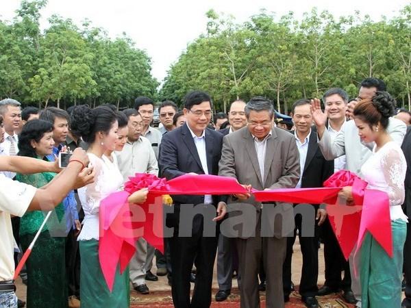 越南新边磅同公司在柬埔寨启动2015年首批采胶活动 hinh anh 1