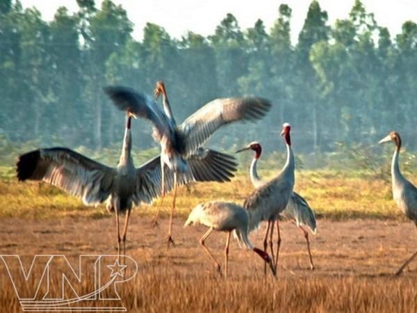 越南鸟栖国家森林公园正式推出绿色旅游线路 hinh anh 1