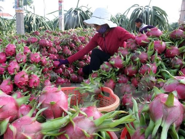 越共中央经济部部长王廷惠:科技成果推广应用促进农业结构调整 hinh anh 1