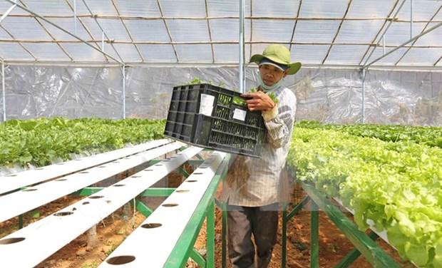 日本企业拟定在越南河南省投资生产有机蔬菜 hinh anh 1