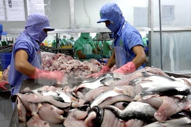 越南致力于打造查鱼产品品牌加大查鱼产品出口力度 hinh anh 1