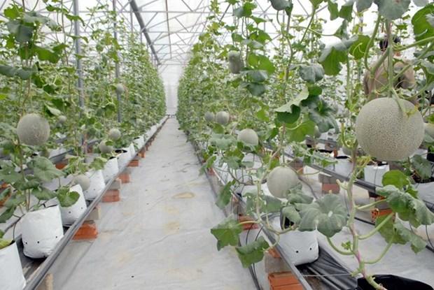 胡志明市与古巴分享发展农业的经验 hinh anh 1