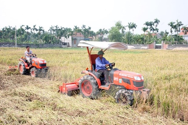 越南农业部门保障粮食安全改变农村面貌 hinh anh 1