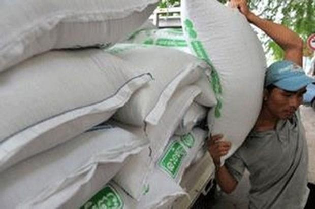 今年前8个月柬埔寨大米出口量达逾34.21万吨 hinh anh 1