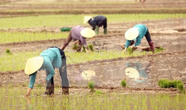 越南与大湄公河次区域各国分享减排水稻生产的经验 hinh anh 1