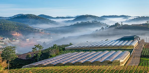 越南西原地区首家大型草药生产厂正式落成 hinh anh 1