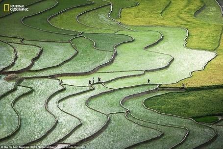 越南安沛省梯田照片列入2015年国家地理全球摄影大赛精选作品名录 hinh anh 1