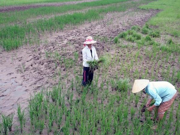 越南必须做好好适应全球气候变化影响的准备 hinh anh 1