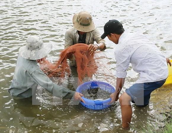 越南虾类产品对英国出口量继续增长 hinh anh 1