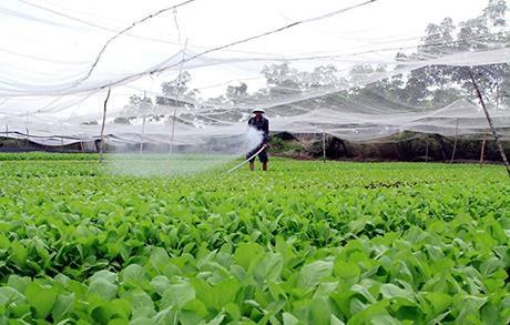 越南需进一步完善农业领域的招商引资政策 hinh anh 1